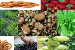 बुद्धि बढाउने खाद्यान्न तथा फलफूलहरू