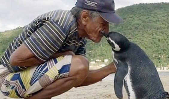 love between penguin and man
