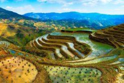 नेपालको कृषि विकासमा विज्ञान र प्रविधि