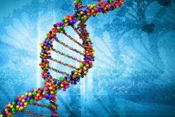 DNA (डीएनए) भनेको के हो ? यसले कसरी काम गर्छ ?