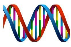 विधि विज्ञानमा डीएनएइकाईमा के के को परीक्षण गरिन्छ ?